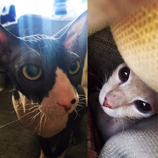 коты Виктории Райдос